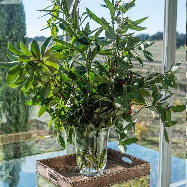 plantas para decorar eventos
